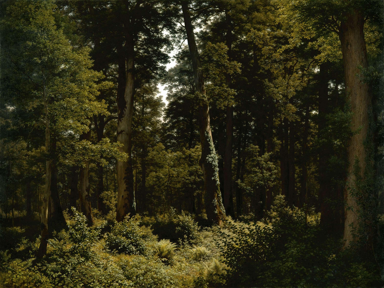 Der Eichenwald